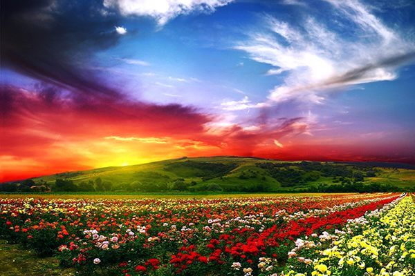 Overlooking colorful valley with flowers in the foreground and a dramatic skyline